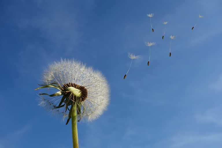 white-dandelion-under-blue-sky-and-white-cloud-39669